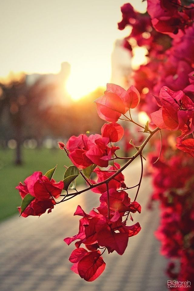 Pin By Stalk My Closet On Wallpapers In 2020 Beautiful Nature Wallpaper Nature Backgrounds Iphone Beautiful Flowers Wallpapers