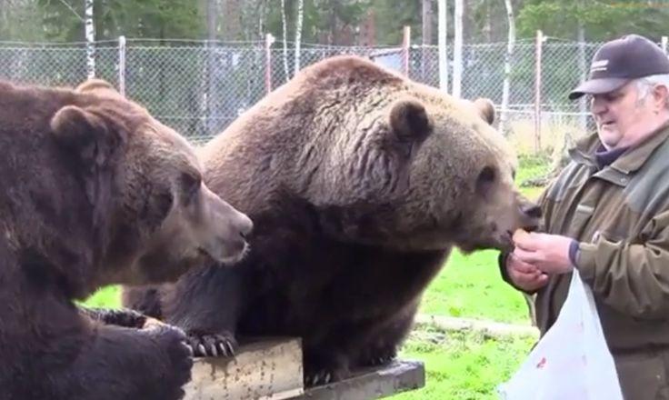 Finnish Man Has Amazing Bond With Brown Bears (VIDEO)