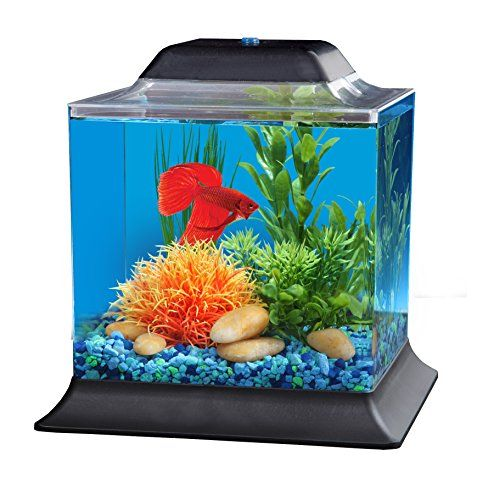 Best 25 aquarium store ideas on pinterest neon knee for Betta fish store