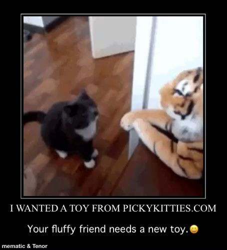 Your Cat Needs a New Toy Go To: 👉www.PickyKitties.com👈Mary West