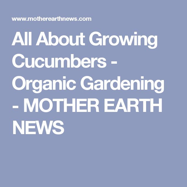 All About Growing Cucumbers - Organic Gardening - MOTHER EARTH NEWS