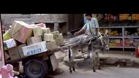 Petition · Government of Pakistan: Replace animal carts with heavy vehicles before animals die with heat · Change.org