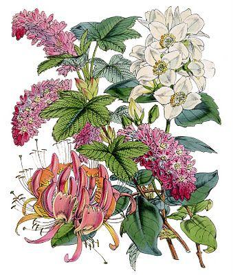Instant art = botanical printable + frame