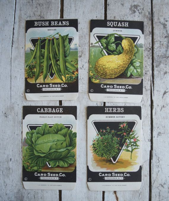 Lot of 4 Antique vintage 1920s Card Seed Co. seed packets