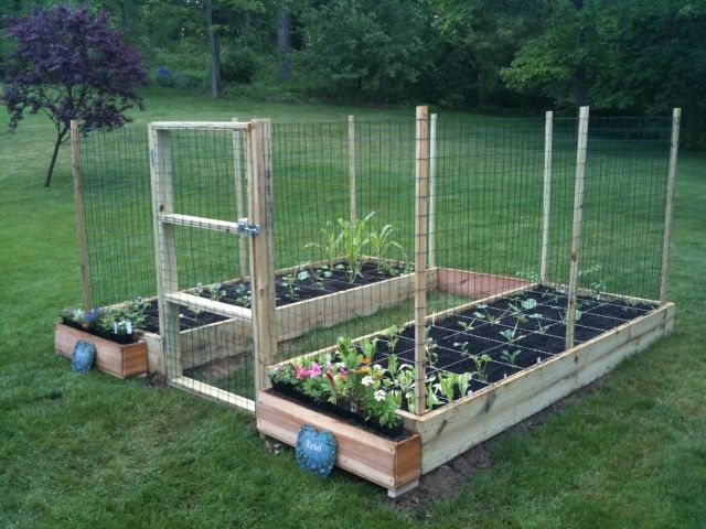 Square foot garden with hinged doors made of chicken wire