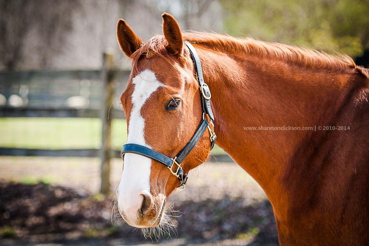 Fairfield County Photographer - Pony Rides For A Purpose