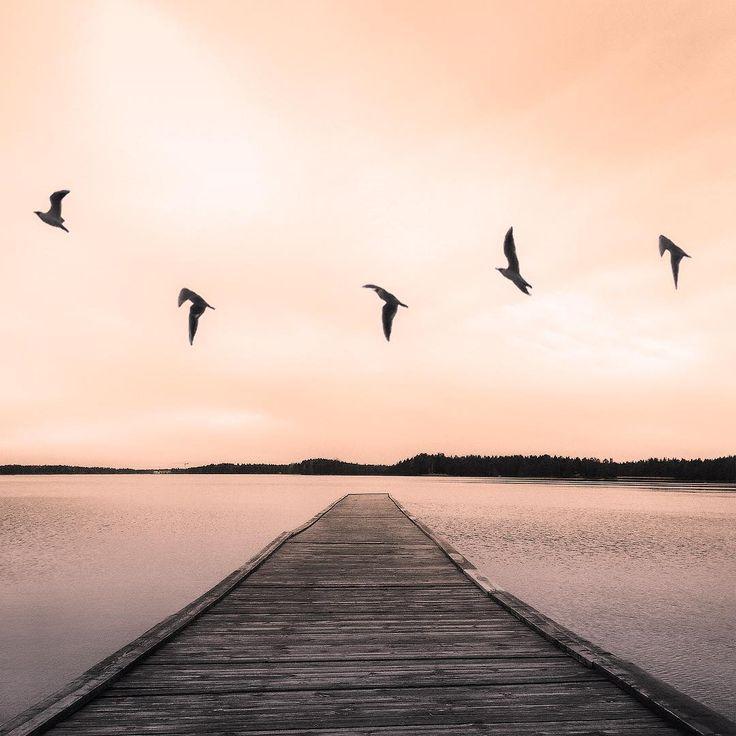 #Nydalasjön #Umeå  #skylovers #sky #ic_birds #rsa_birds #birdslover  #birds #wildlife_perfection #wildlife_seekers #wildlifeplanet #wildlife #wildlifephotography #sweden #umeå #visitsweden #rsa_minimal #minimalmood #ig_minimal #ig_sweden #bird_watchers_daily #minimalbirds #vzcomood #visitumeå #sweden #loves_sweden