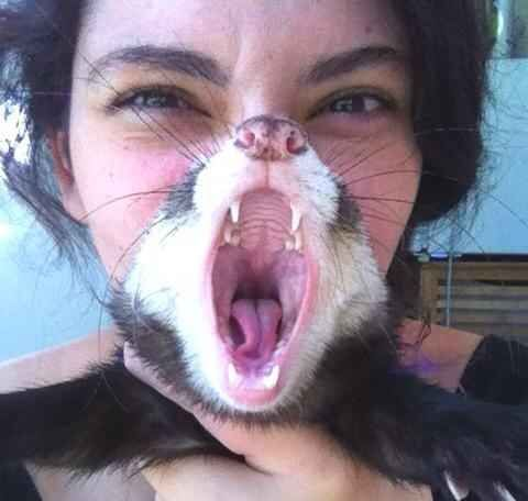 The perfectly timed ferret scream picture: | The 45 Best Perfectly Timed Photos Of 2013