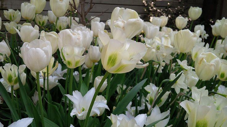 Design a white garden