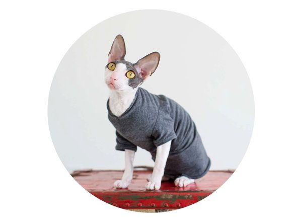 Cat Clothes charming grey T-Shirt soft and comfortable, cat shirt, sphynx clothes, dog clothes pet sweater in short or long sleeves