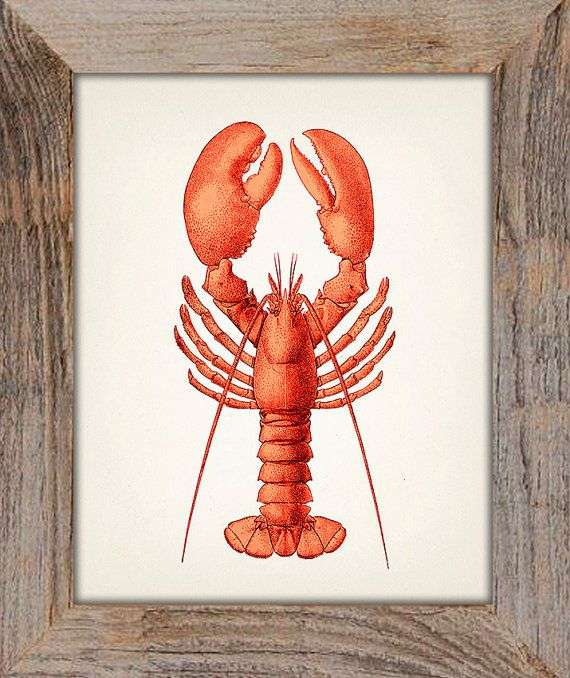 Lobster American  8x10  Fine art print of a by ThePrintedVintage, $11.50