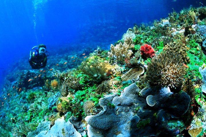 Taman Laut Selat Pantar Alor Nusa Tenggara Timur. ZonaAero #tourismindonesia