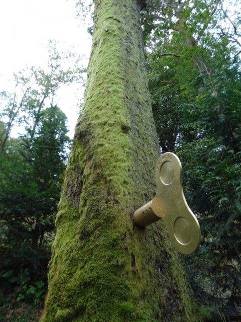 clockwork forest