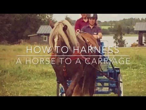MW Hevospalvelut - YouTube How to harness a horse to a carriage - tutorial in English.