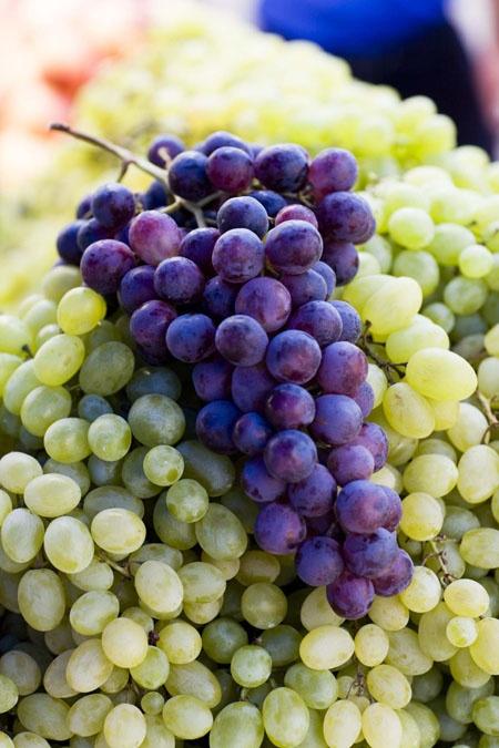 wine tasting Pelsjec Peninsula