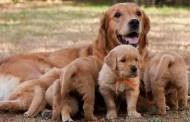 Dog and puppies classifieds, dog breed descriptions, all dog breeds photos