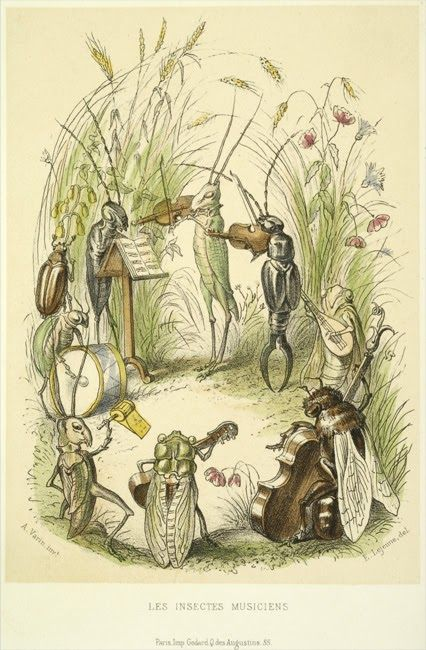 Insect Orchestra. It is the smallest of things in life that can matter. I love a cricket chirp. Think of those who cannot hear it. CH.