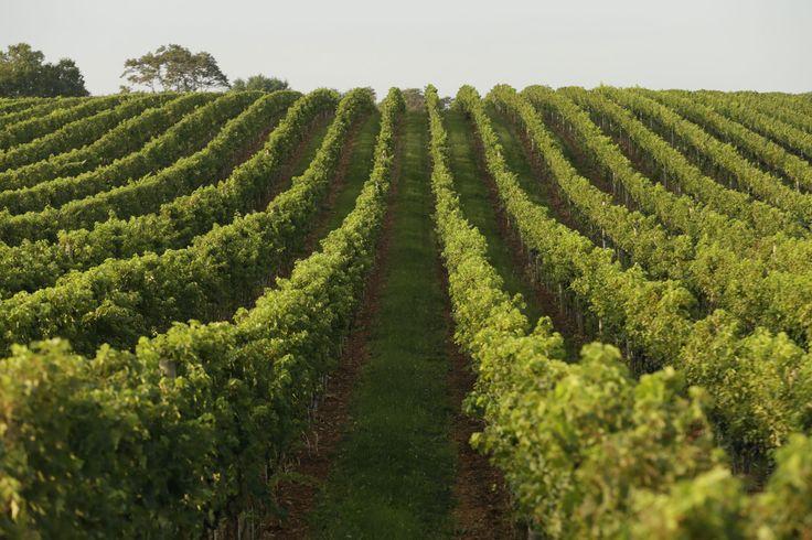 vineyard.jpg (2000×1333)