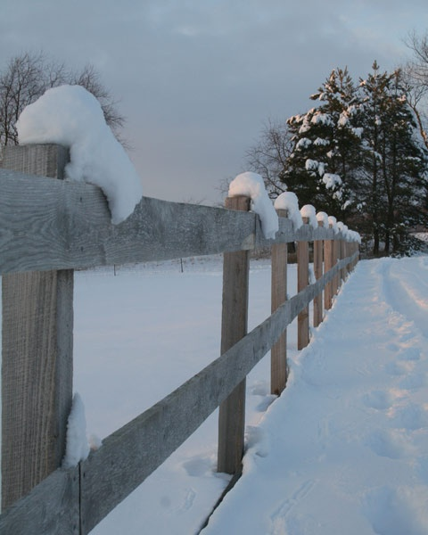 Snow resting on the fence