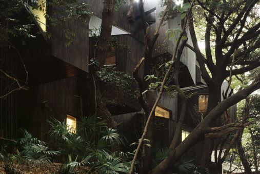中村拓志 Dancing trees,Singing birds