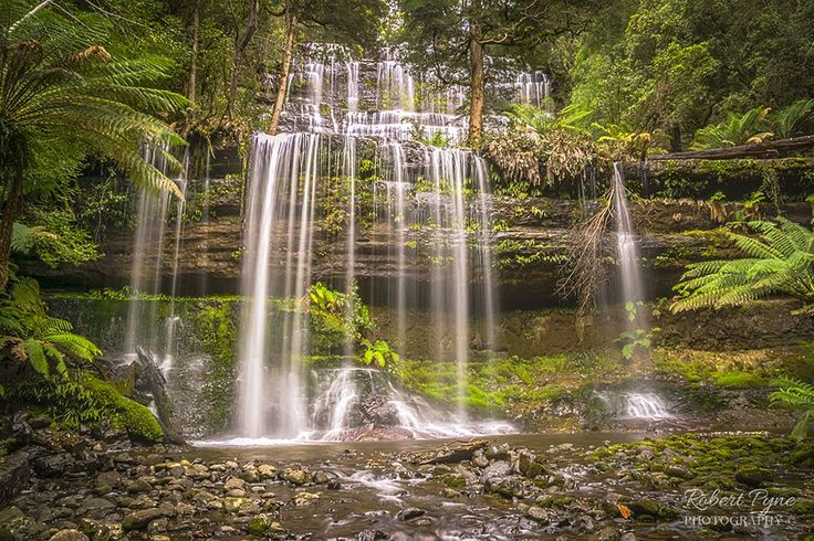 Russell Falls by Robert Pyne