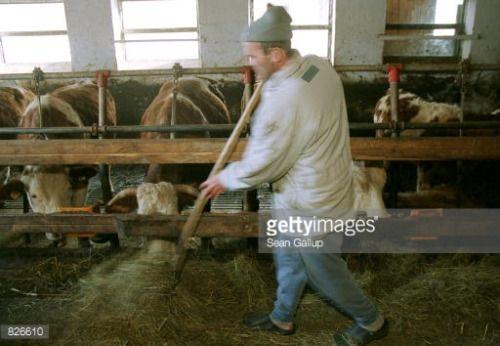 386200 01: German organic farmer Johann Schaffer distributes hay... #arnbruck: 386200 01: German organic farmer Johann Schaffer… #arnbruck
