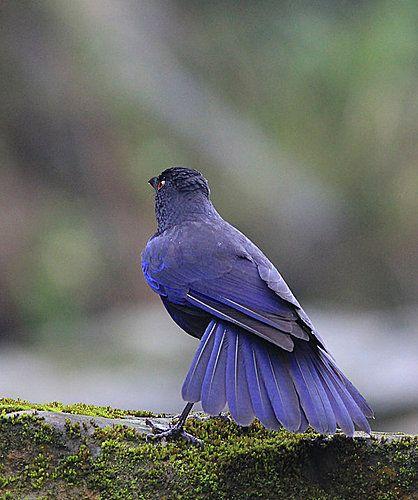Weiß jemand, was das für ein Vogel ist??