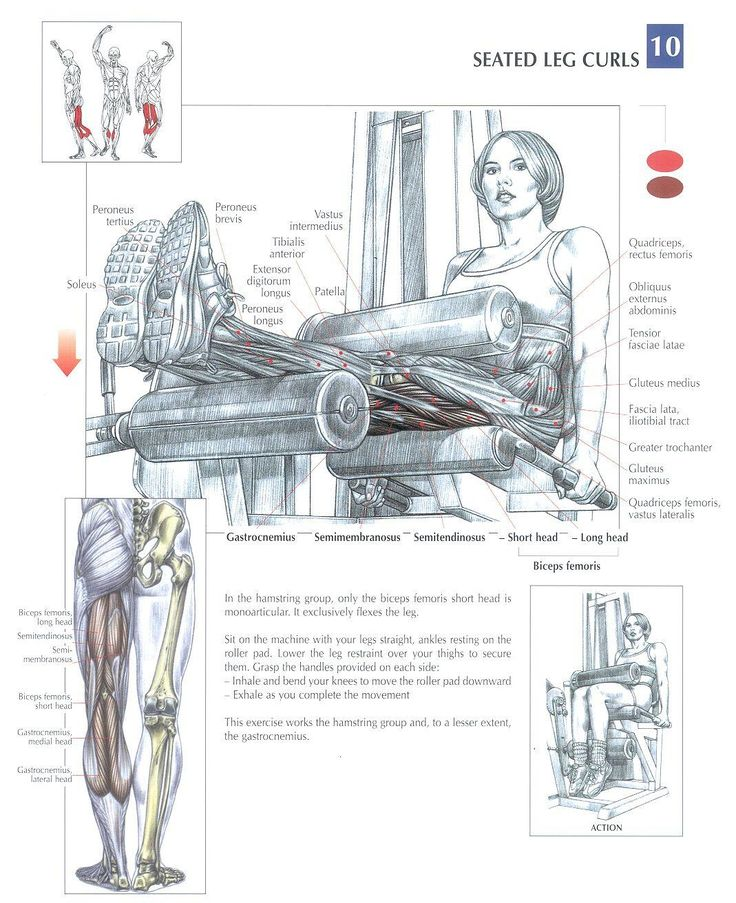 Seated Leg Curls ~ Repinned by Crossed Irons Fitness #leg #workout #fitness