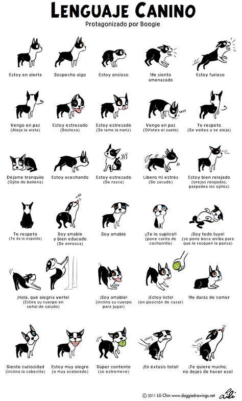 Bebés, niños y perros, los consejos prácticos de Santi Vidal para una convivencia sin sobresaltos   SrPerro.com, la guía para animales urban...