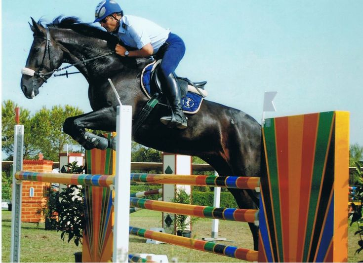 From Italy Air Force Marshal Dario De Pascali rides Principessa Luna in 130 cm high Show jumping Competition in a bitless bridle.