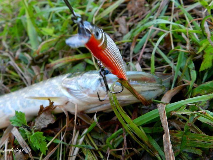 Охота со спиннингом за щукой бывает весьма увлекательна и главное тут-подобрать ключик к рыбе и водоёму. Предлагаю своим читателям ознакомиться с очередным моим материалом под названием «Щучий выезд с воблерами GERMAN».