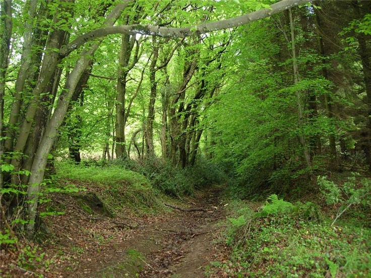 Wentwood Forest, Gwent.