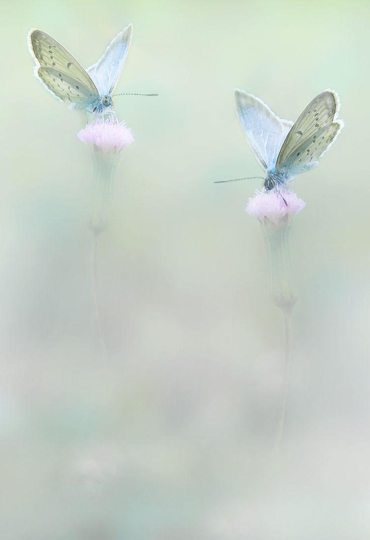 1116 best Butterflies and Flowers images on Pinterest | Butterflies ...
