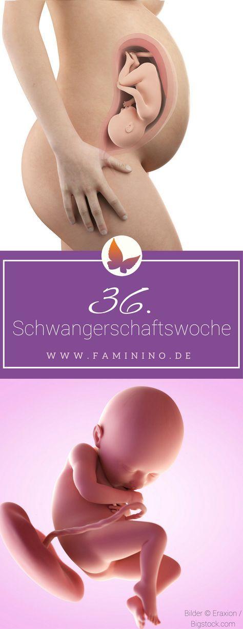 36. SSW (Schwangerschaftswoche): Dein Baby, dein Körper, Beschwerden und mehr