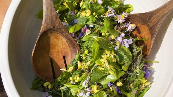 Kräftiger Geschmack: Wildkräutersalat –    Je 2 Hände voll junge Löwenzahn- und Brennnesselblätter, etwas Sauerampfer oder Bärlauch und einige Blüten der Gänseblümchen waschen und gut abtropfen lassen. Eine Vinaigrette aus 3 EL Zitronensaft, 1 EL Honig, Salz, Pfeffer, 3 EL Walnuss-Öl und 1 kleinen, geriebenen Schalotte anrühren. Blätter und Blüten darin wenden und sofort servieren. Das Ganze ist mit anderen Salatblättern kombinierbar und lässt sich so auch geschmacklich abwandeln