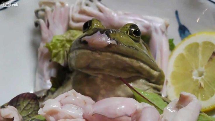 Live Frog sashimi (Cane Toad)