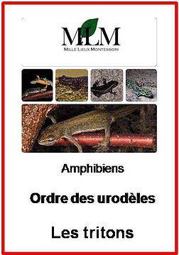 L'ordre des Urodèles: les tritons | 1000lieux-montessori
