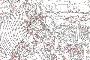 Malen-Nach-Zahlen Vorlage Zebra & Tiere
