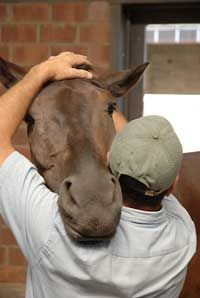 Masterson Method Equine Massage Training for Equine Massage Therapist. Love this photo! I truly believe in massage for horses and humans!