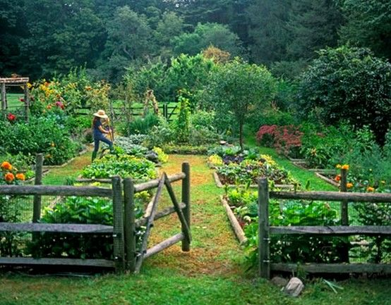 Organic Vegetable Garden  I want to learn how to survive like my great-grandparents did.