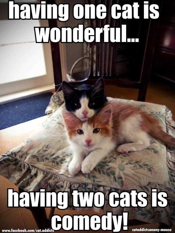 How true! Comedy Cat TV....                                                                                                                                                      More