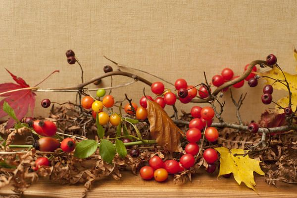 a pretty display of autumn berries and fruits on a wooden shelf with linnen paper background - By stockarch.com user: creepyhalloween