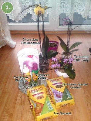 17 ideen zu orchideen auf pinterest wachsende orchideen orchideenpflege und hawaii blumen. Black Bedroom Furniture Sets. Home Design Ideas