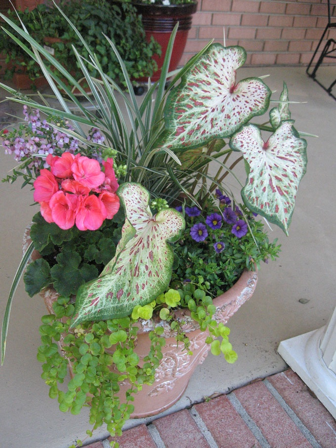 47 Best Front Porch Container Garden Ideas Images On
