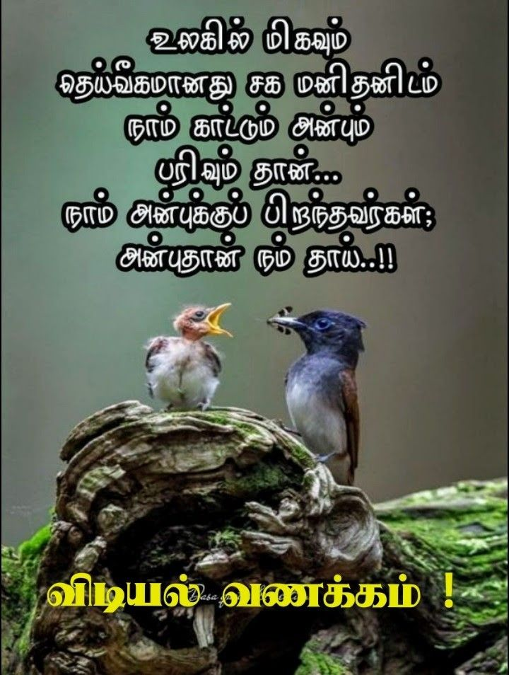 Pin by Barthasarathy Couppoussamy on காலை வணக்கம் in 2020