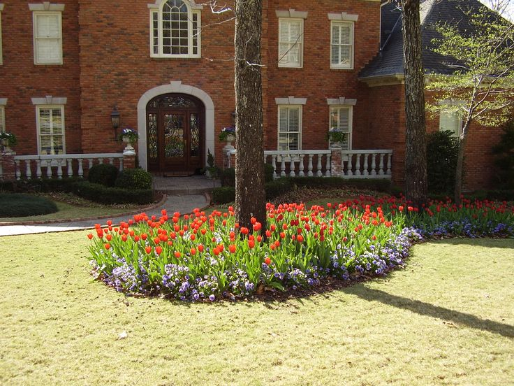 Season Color By Andyu0027s Landscape Service In Birmingham, AL. Red Kingsblood  Tulips And Blue