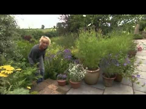 gw bits carol klein campanulaceae