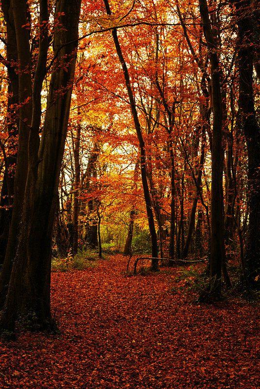 autumn colours | by Barry Kieran Photography