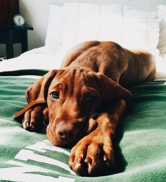 ♕@Kyrapg ☾ IG : Kyrapg : IG #puppy