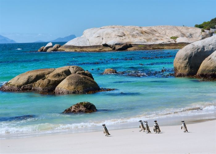 Cape Town #Penguins